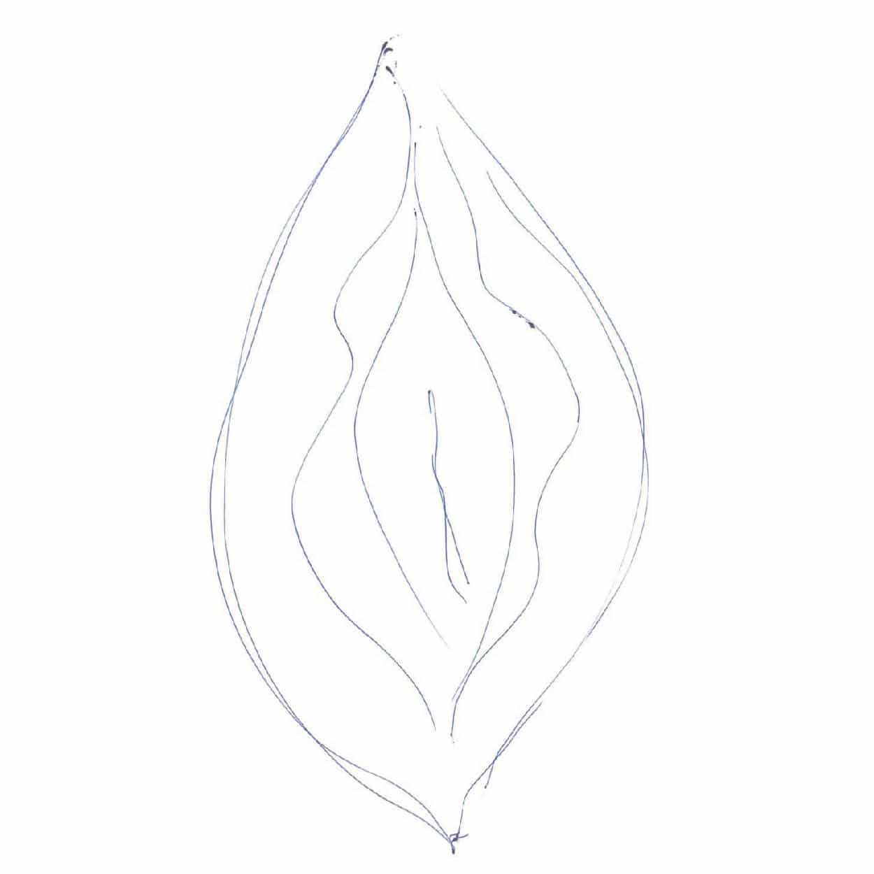 Beautiful vulva drawing